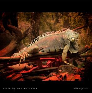 Terrarium pour Iguane